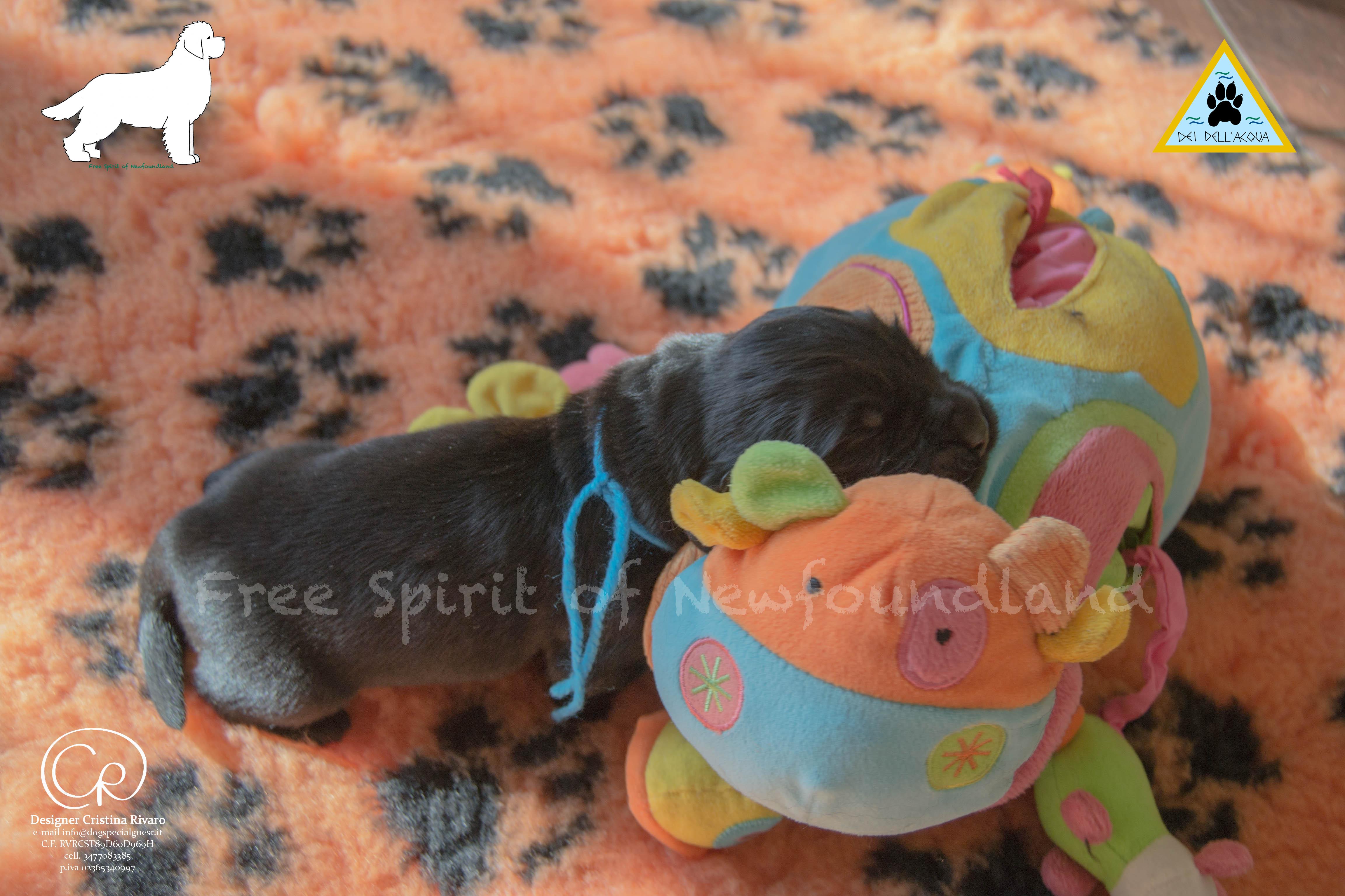 Cuccioli Terranova5-associazione-dei-dell-acqua