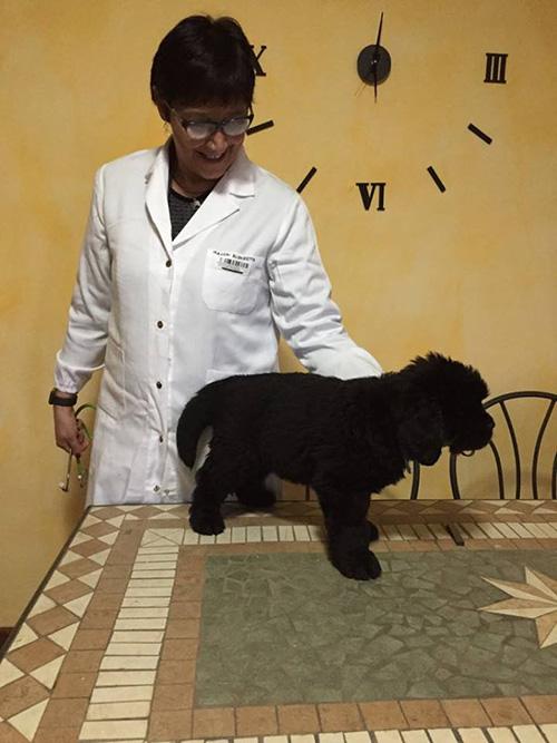Elisabetta Macchi, primo soccorso veterinario - Associazione Dei dell'acqua onlus