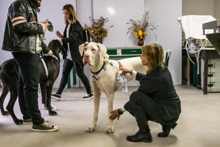 Dog Special Guest _ 2 alani ad un matrimonio